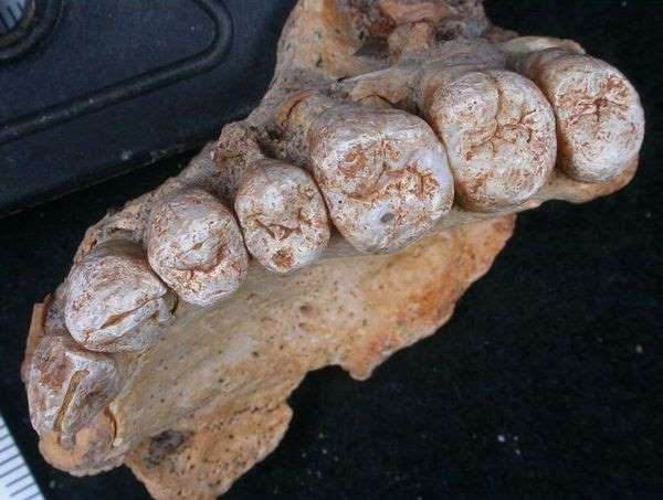 Un fossile trouvé en Israël remet à plat l'histoire de l'homme moderne