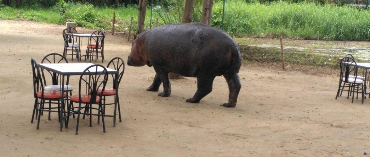 L'Office Burundais pour la Protection de l'Environnement évoque le conflit prégnant entre l'Homme et l'Hippopotame à Bujumbura