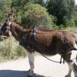 Réaction à: Jeune Afrique N° 2992 du 13 au 19 mai 2018, croit-il que les Burundais ont des œillets comme des ânes ? L'HOMME DE LA SEMAINE NKURUNZIZA TOUT- PUISSANT ?