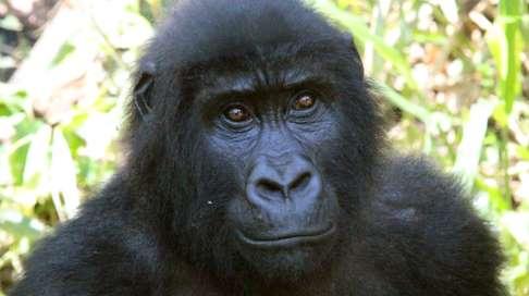 Le gouvernement congolais (RDC) officialise son projet d'exploitation pétrolière dans les parcs naturels des Virunga et de la Salonga