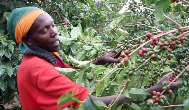 Campagne café 2018-2019 : un taux de réalisation de 126%