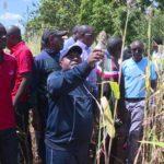 Brarudi et l'exploitation du Sorgho blanc -urubere - emploie plus de  10.000 familles d'agriculteurs à Cankuzo