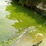 Burundi : Le lac Tanganyika est devenu vert la journée du 10/09/2018