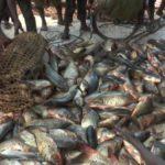 Lac Rweru: augmentation de la production de poissons, un des impacts du projet LVMP II