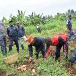 Le Président du Burundi récolte les patates douces au agro-pastoral de Rutanga