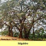 Les paysages naturels sacrés de Muramvya, de Mpotsa et de Nkiko-Mugamba
