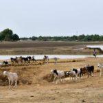 Niger: les attaques jihadistes plongent les populations dans la précarité à Diffa
