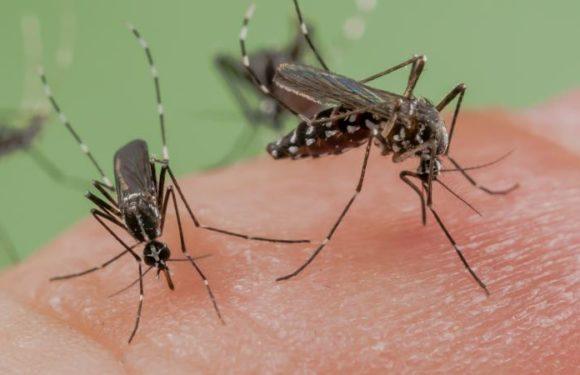 Le Burundi frappé par une épidémie de paludisme, alternativement la plante Artemisia annua soigne le paludisme!