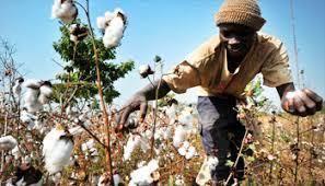 Burundi/Brésil : Coopération pour accroître la production du coton