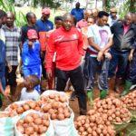 Burundi : Le Chef d'Etat procède à la récolte de pommes de terre ...