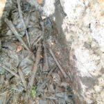 Burundi : La CVR a découvert une fosse commune à MARANGARA - Cfr Génocide de 1988