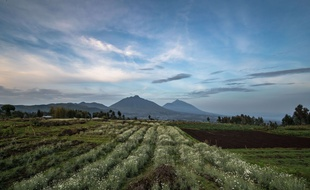 parc-national-virunga-2016 Paul Goldstein/Exodus/Rex Shutterstock