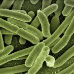 Des chercheurs israéliens créent une bactérie qui consomme du CO2