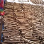 Génocide 1972 : Conférence de presse de la  CVR du Burundi – 6.032 corps trouvés dans 6 fosses à Karusi