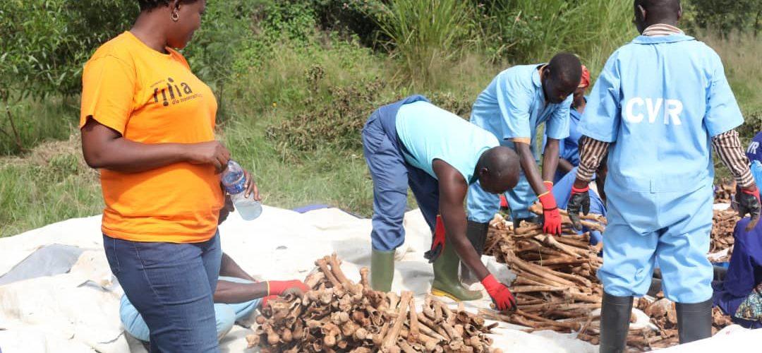 Génocide 1972 au Burundi   : 1.436 restes de corps dans les fosses de MASHITSI-GIHETA / GITEGA