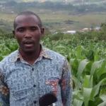 Le BPEAE de NGOZI pousse à cultiver des haricots volubiles / Burundi