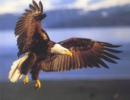 USA: La chute de l'aigle est proche