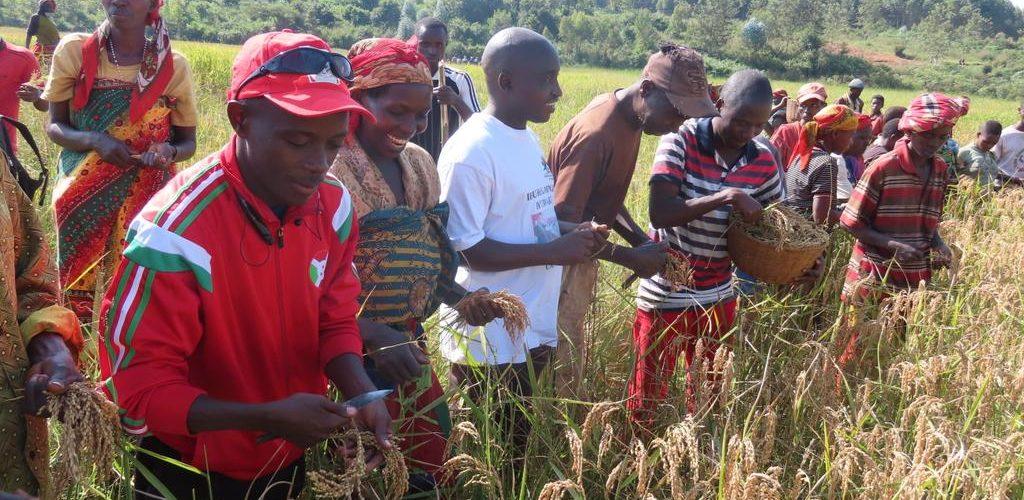 L' ANACOOP  était en activités champêtres à NGOZI / BURUNDI