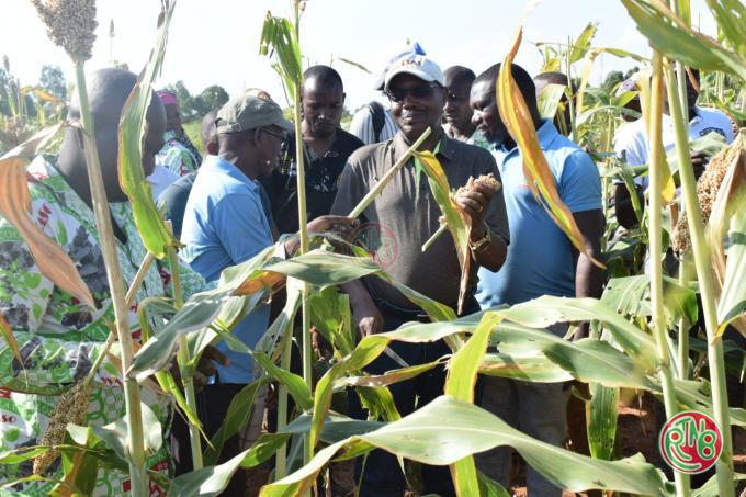 La coopérative VASO contribue à la stabilité alimentaire (D.G RUREMA)