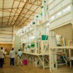 SOVAPA veut augmenter sa production de riz / BURUNDI