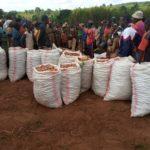 ANACOOP - Visite d'une coopérative SANGWE à HINA, zone MIVO, à NGOZI / BURUNDI