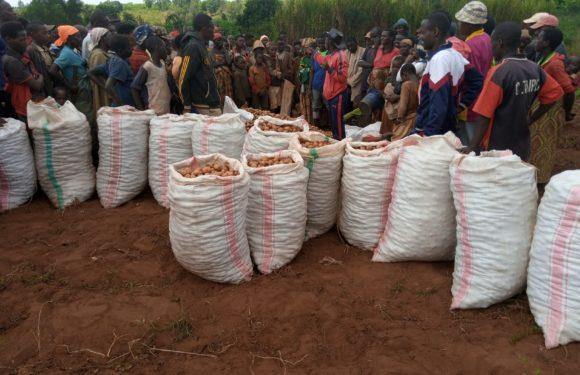 ANACOOP – Visite d'une coopérative SANGWE à HINA, zone MIVO, à NGOZI / BURUNDI