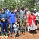 Bonne récolte de pommes de terre chez Feu NKURUNZIZA , NGOZI / BURUNDI
