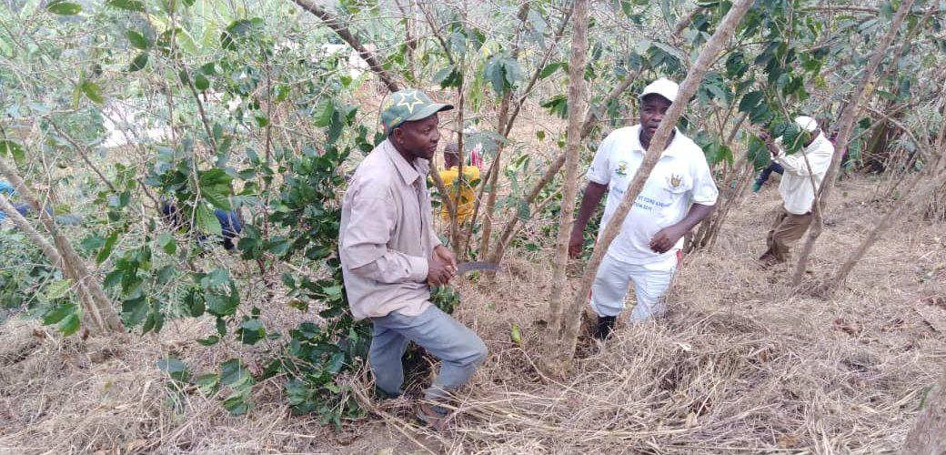 Travaux de Développement Communautaire TDC – Tailler et Pailler en commune BUYENGERO, RUMONGE / BURUNDI