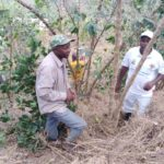 Travaux de Développement Communautaire TDC - Tailler et Pailler en commune BUYENGERO, RUMONGE / BURUNDI