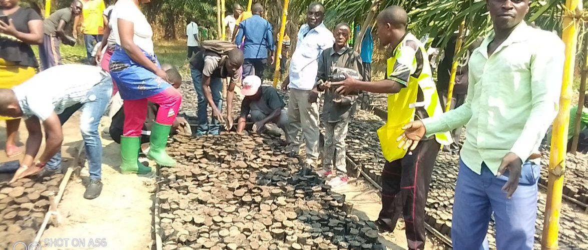 TRAVAUX DE DEVELOPPEMENT COMMUNAUTAIRE – Planter des arbres sur la colline MUSENYI, en commune MPANDA, BUBANZA / BURUNDI
