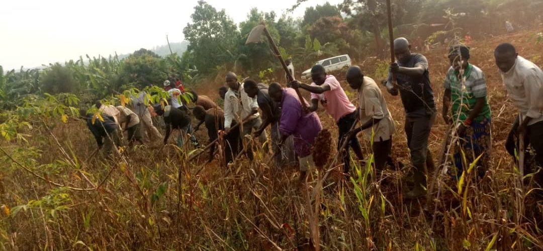TRAVAUX DE DEVELOPPEMENT COMMUNAUTAIRE : Labourer un champ de 2 hectares pour les nécessiteux de KIRUNDO / BURUNDI