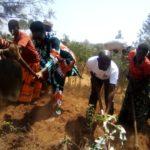 TRAVAUX DE DÉVELOPPEMENT COMMUNAUTAIRE :  Cultiver les champs en colline CANZIKIRO, KARUSI / BURUNDI