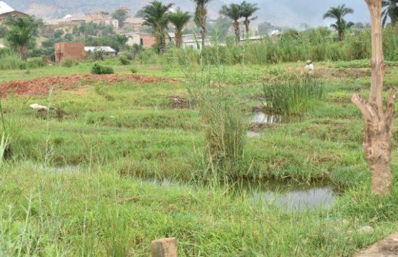 Sites Nyabugete et Gisyo : la viabilisation n'a pas respecté les zones humides