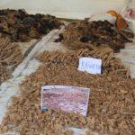 GENOCIDE DE 1972 CONTRE LES HUTU DU BURUNDI : 2.328 victimes exhumées à RUMONGE et MAKAMBA