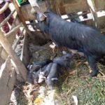 Le CNDD-FDD BWERU évalue les Coopératives collinaires SANGWE, RUYIGI / BURUNDI