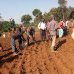 TRAVAUX DE DEVELOPPEMENT COMMUNAUTAIRE – Semer haricots et maïs dans un champ en zone KIRUNDO RURAL / BURUNDI