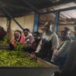 Le Gouverneur de KAYANZA visite le complexe Théicole de l'OTB RWEGURA / BURUNDI