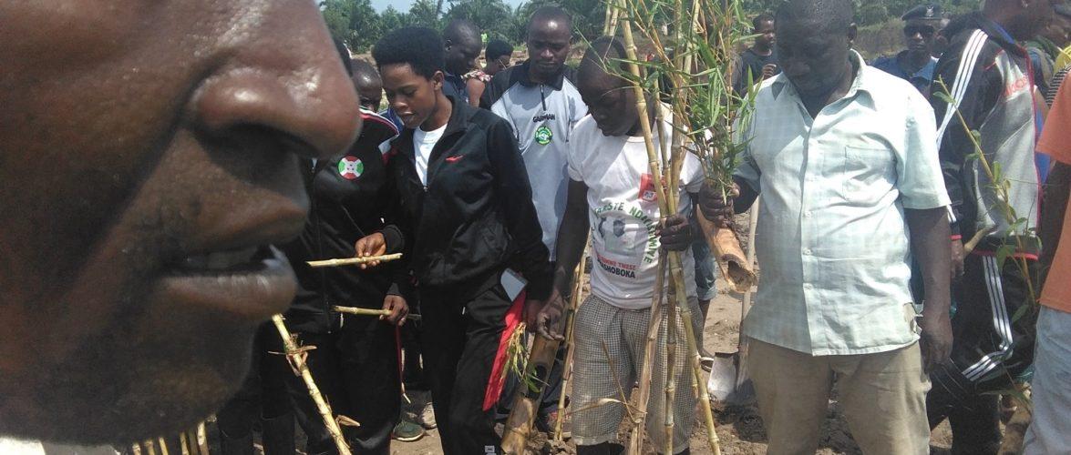 TRAVAUX DE DEVELOPPEMENT COMMUNAUTAIRE – Planter des bambous le long de la rivière GIFURWE à MPANDA,  BUBANZA / BURUNDI