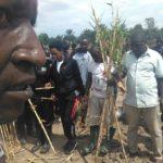 TRAVAUX DE DEVELOPPEMENT COMMUNAUTAIRE - Planter des bambous le long de la rivière GIFURWE à MPANDA,  BUBANZA / BURUNDI