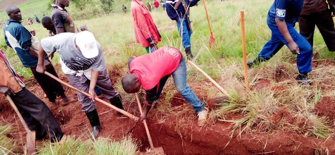 TRAVAUX DE DEVELOPPEMENT COMMUNAUTAIRE – Travaux champêtres en colline KIZINGOMA, commune GIHOGAZI, KARUSI / BURUNDI