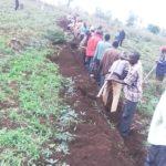 TRAVAUX DE DEVELOPPEMENT COMMUNAUTAIRE - Travaux champêtres sur les collines CERU et NYABIBUYE, à MUSONGATI, RUTANA / BURUNDI