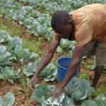 Don de 20 M $ de la BAD au Burundi pour la sécurité alimentaire et nutritionnelle