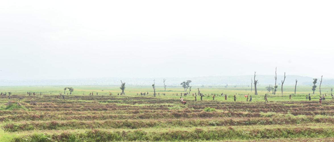 BURUNDI : La Coopérative d'Investissement Agropastoral – CIAP à RUGOMBO / CIBITOKE