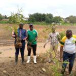 BURUNDI : TRAVAUX DE DÉVELOPPEMENT COMMUNAUTAIRE - Planter des bambous sur les rives de la rivière NTAHANGWA