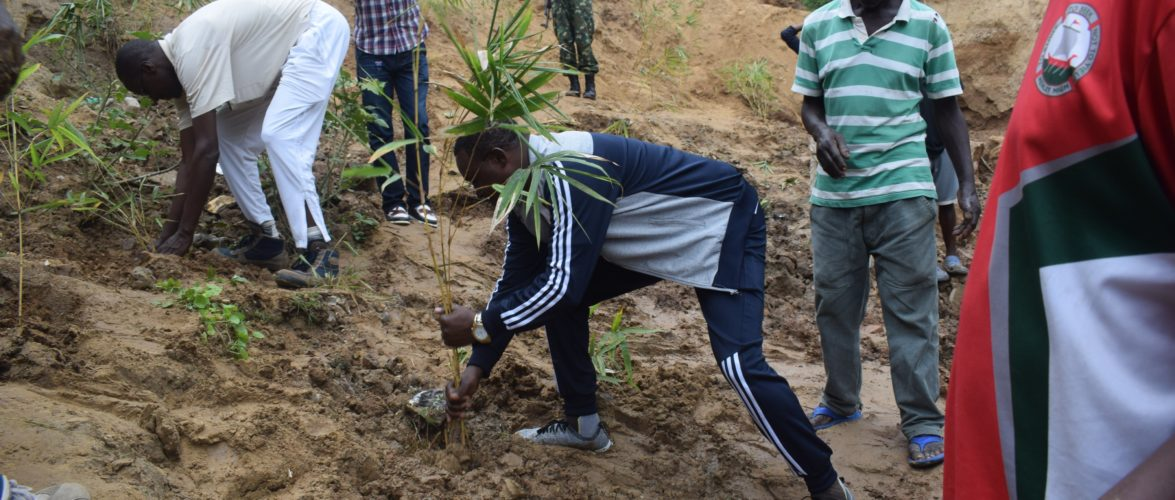 BURUNDI : TRAVAUX DE DEVELOPPEMENT COMMUNAUTAIRE – Planter plusieurs eucalyptus dans la vallée de NYAKIZU, MUHA / BUJUMBURA