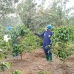 BURUNDI : Lancement d'une campagne café à MUTUMBA, KARUSI