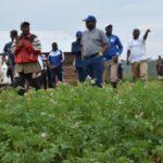 BURUNDI : Visite d'une exploitation de culture de pommes de terre à GAHOMBO, KAYANZA