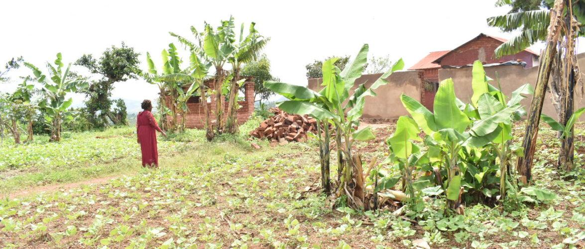 BURUNDI – GENOCIDE 1972 : Une victime récupère ses biens à MABANDA / MAKAMBA