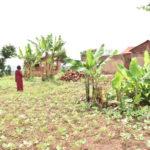 BURUNDI - GENOCIDE 1972 : Une victime récupère ses biens à MABANDA / MAKAMBA