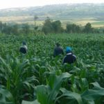 BURUNDI : Visite de 3 coopératives SANGWE à BURENZA, BUZIRAGAHAMA, et BUYE / NGOZI